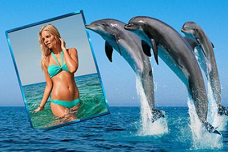Фоторамка - Дельфины